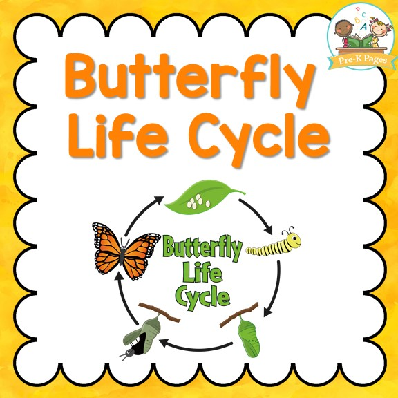 Butterfly Life Cycle Printables for Preschool and Kindergarten