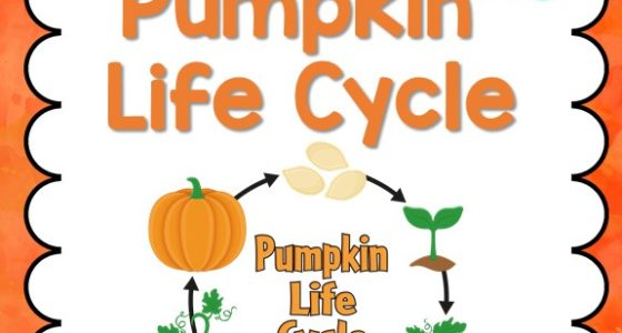 graphic regarding Life Cycle of a Pumpkin Printable known as Pumpkin Everyday living Cycle - Pre-K Webpages